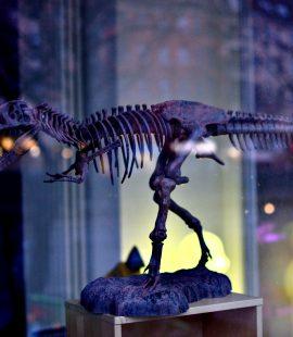 dinosaur mad kids