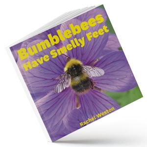 Bumblebees have smelly feet