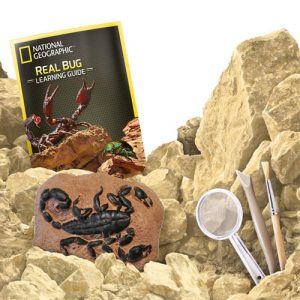 Real Bug Dig Kit